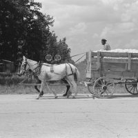 Hauling cotton to gin, Lehi, Arkansas. Russell Lee, 1938.