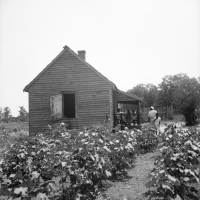 Typical cotton picker's shack of the South. Mississippi. Dorothea Lange, 1936.