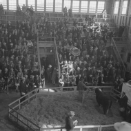 Crowd at the auction of the grand champion bull at the San Angelo Fat Stock Show, San Angelo, Texas. 1940