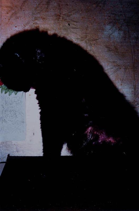 20101025010517 richard billingham untitled10 Custom RICHARD BILLINGHAM: Reinterpreting Unconventional Family Photographs: Returning to Richard Billinghams Rays a Laugh; Series (2007)