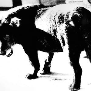 "DAIDO MORIYAMA: Daido Moriyama: Investigations of a Dog"" (1999)"