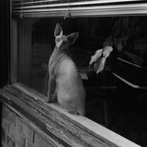 MARK STEINMETZ: The gray that blankets the living…