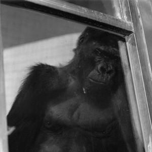 "JEONGMEE YOON: ""Zoo"" (1998-1999)"
