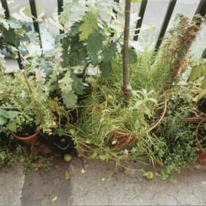 """ASX.TV: Wolfgang Tillmans – """"Ursuppe And Other Garden Pictures"""" (2012)"""