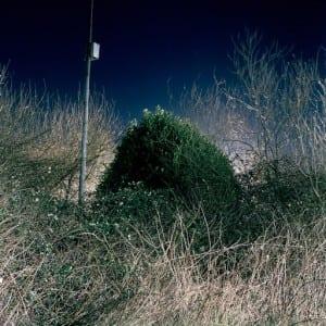 """SANDER MEISNER: """"Botanica"""" (2012)"""