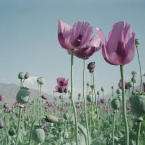 "REVIEW: Robert Knoth & Antoinette DeJong – ""POPPY: Trails of Afghan Heroin"" (2012)"