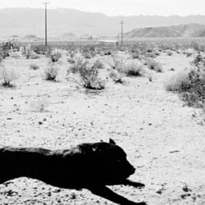 "JOHN DIVOLA: ""DOGS CHASING MY CAR IN THE DESERT"" (1995-1998)"