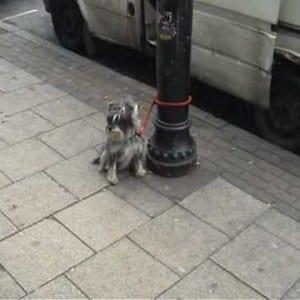 "ASX.TV: Wassinklundgren – ""Waiting Dogs"""