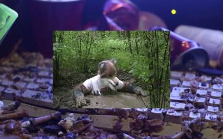 "ASX.TV: Jon Rafman – ""Still Life (Betamale)"" (2013)"