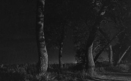 Adams From Summer Nights Walking1 1976-82