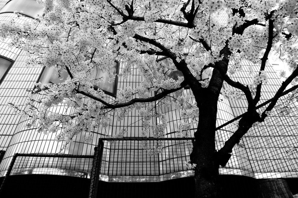 Tokyo-Blur-10 (Custom)